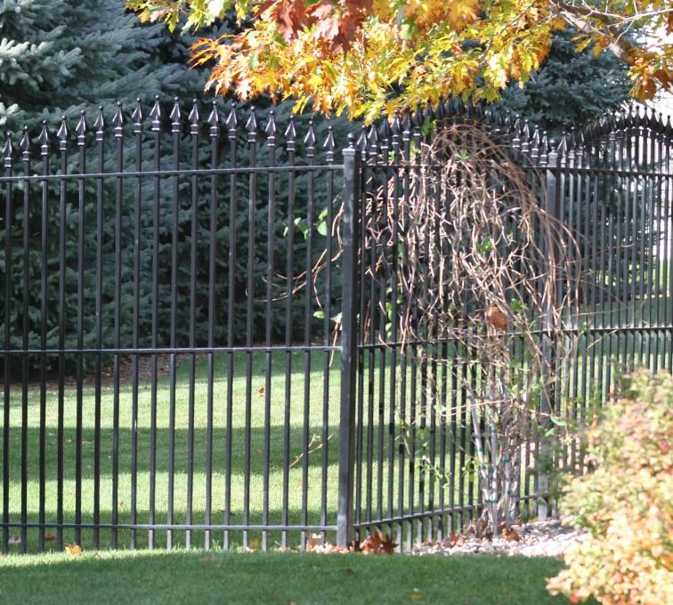 Kansas City Fence Company - Custom Iron Gate Fencing, 1220 Quad Flare Overscallop Ornamental Iron Photo